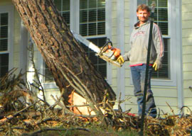 Will homeowners insurance pay to remove a tree - answers.com